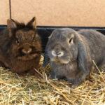 Brownie & Hopsi