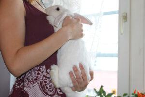 Das Kaninchen am Körper halten