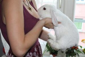 Das Kaninchen langsam zum Körper führen