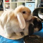 Tobi & Lisabeth