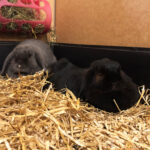 Twinky & Pipkin