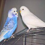 Mikey & Olaf