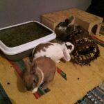 Tyson, Lissy & Balu